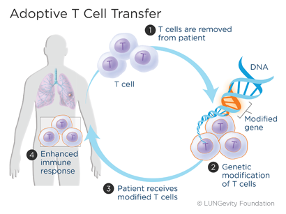 Adoptive T cell transfer