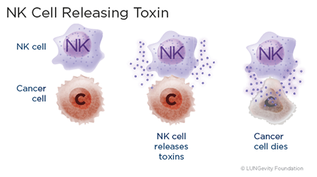 NK cell releasing toxin